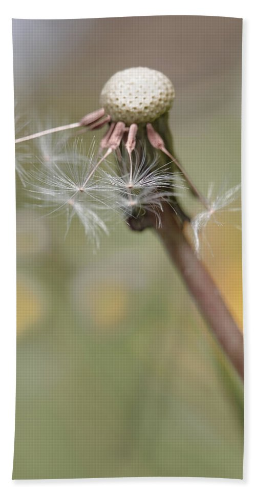 Dandelion Hand Towel featuring the photograph Dandelion Last To Fly Away by Jennie Marie Schell