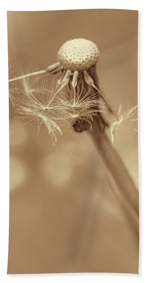 Dandelion Hand Towel featuring the photograph Dandelion Last To Fly Away Sepia by Jennie Marie Schell