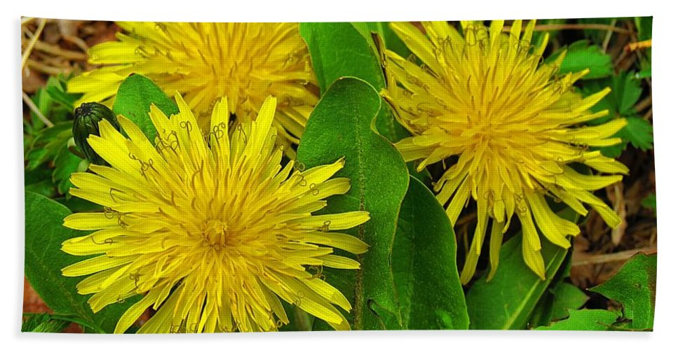 Bath Sheet featuring the photograph Dandelions by MTBobbins Photography