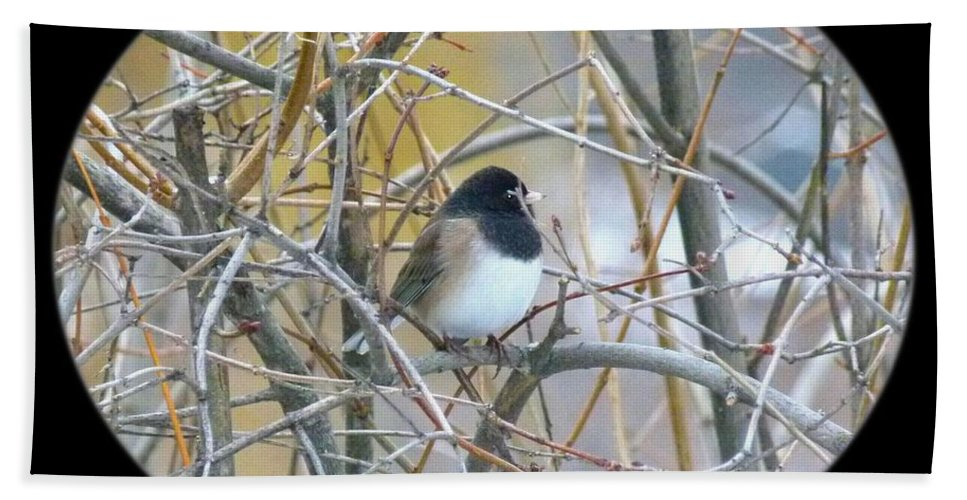 Dark-eyed Junco Hand Towel featuring the photograph Dark- Eyed Junco by Will Borden