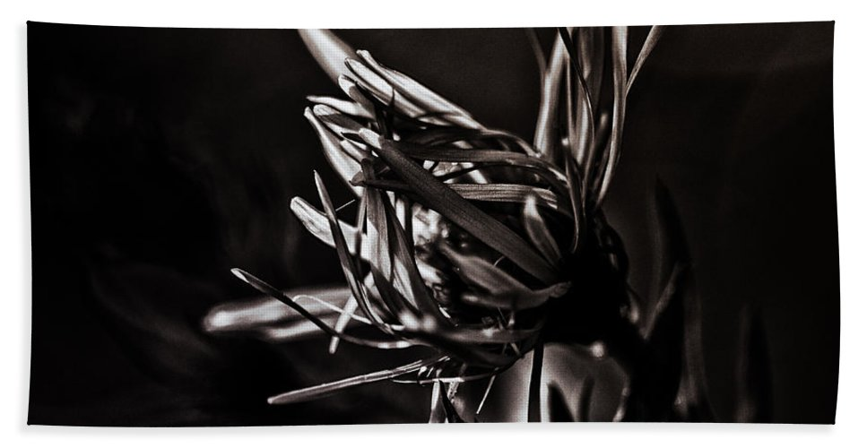 Aster Bath Sheet featuring the photograph Dark Flower by Susan Capuano