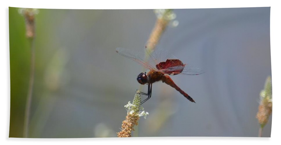 Dark Red Dragonfly Bath Sheet featuring the photograph Dark Red Dragonfly by Maria Urso