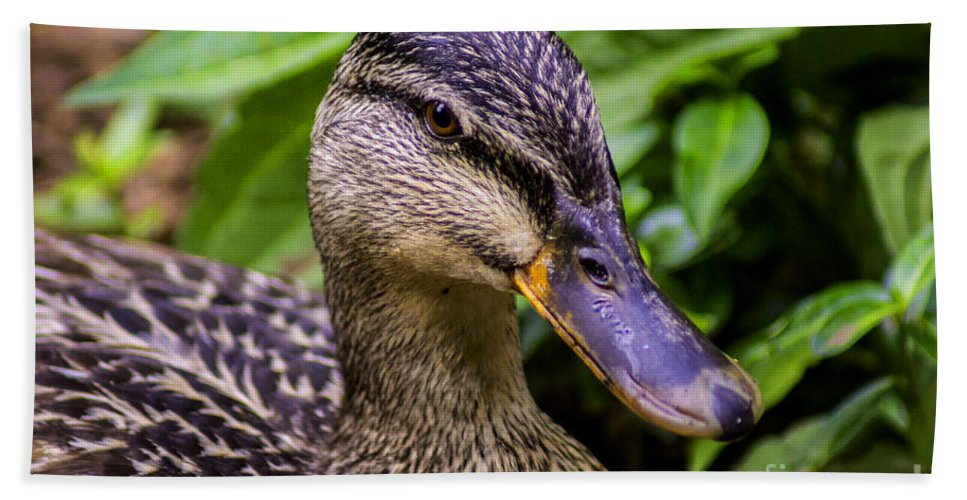 Mallard Hand Towel featuring the photograph Darling Duck by Joe Geraci