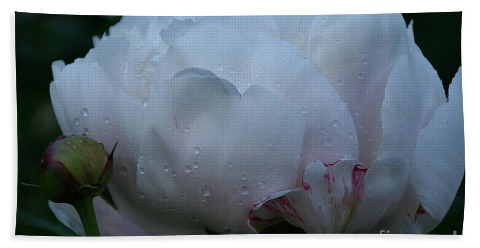 Flower Bath Sheet featuring the photograph Dawning by Susan Herber