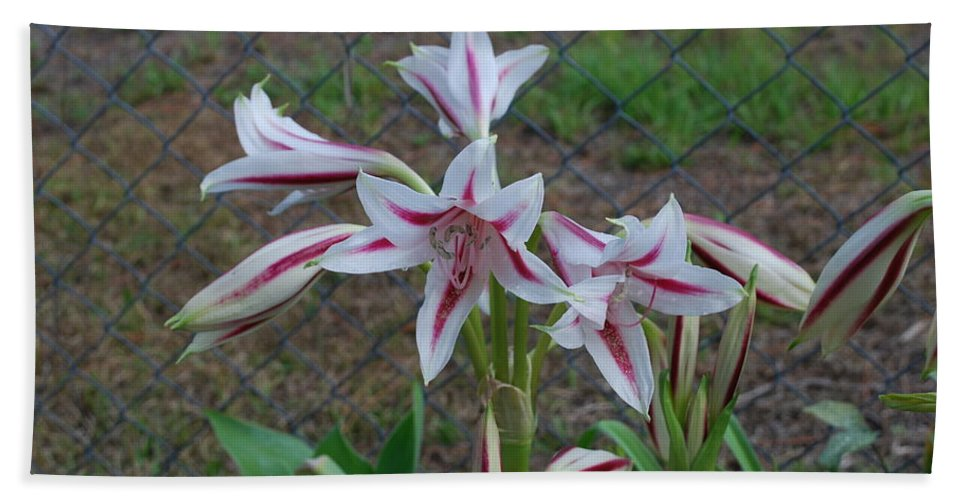 Grows Wild Hand Towel featuring the photograph Day Lilly by Robert Floyd