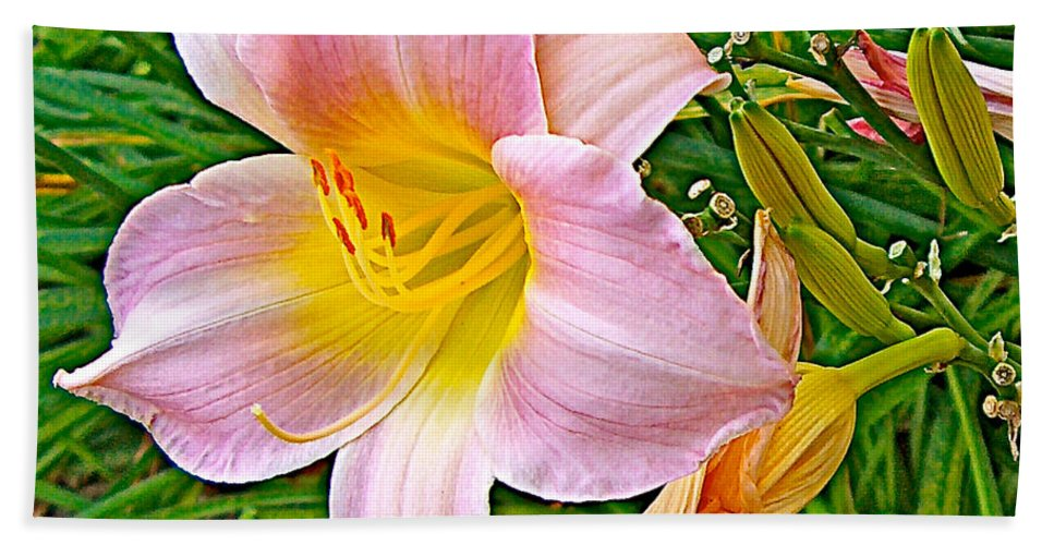 Day Lily Near Ottawa Hand Towel featuring the photograph Day Lily Near Ottawa-ontario by Ruth Hager