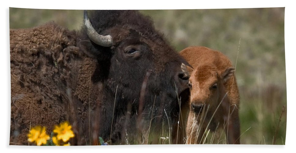Bison Bath Sheet featuring the photograph Day One by Diana Marcoux