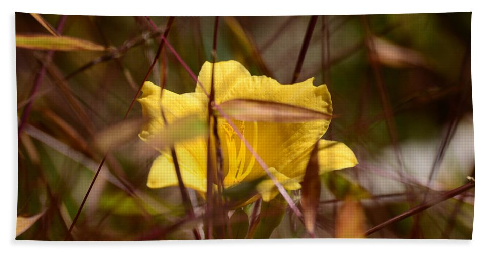Daylily Hand Towel featuring the photograph Daylily In Autumn by Lori Tambakis