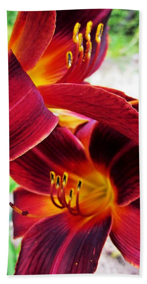 Daylilies Bath Sheet featuring the photograph Daylily Twice by MTBobbins Photography