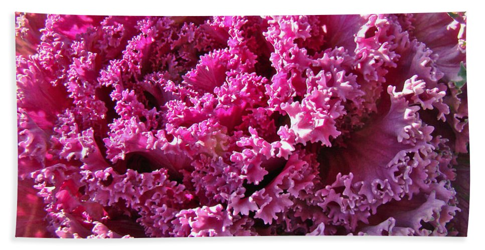 Kale Hand Towel featuring the photograph Decorative Fancy Pink Kale by Mother Nature