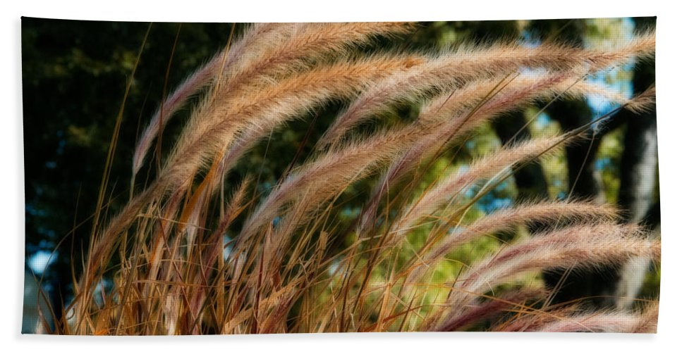 Xdop Hand Towel featuring the photograph Decorative Grass Wind Autumn And Orton by John Herzog