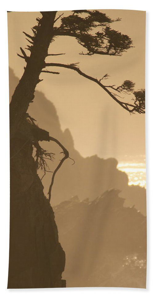 Root Hand Towel featuring the photograph Deep Roots by Laddie Halupa