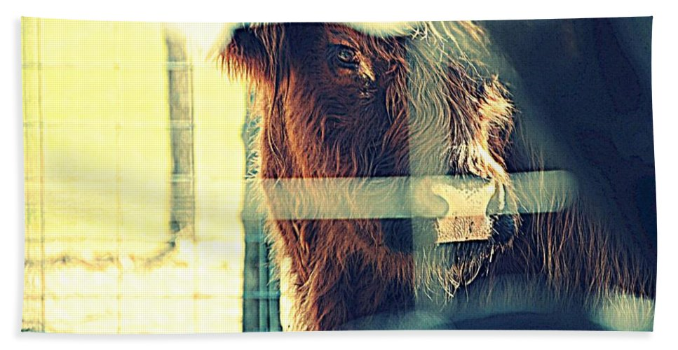 Scottish Highlander Hand Towel featuring the photograph Deep Within by Marysue Ryan