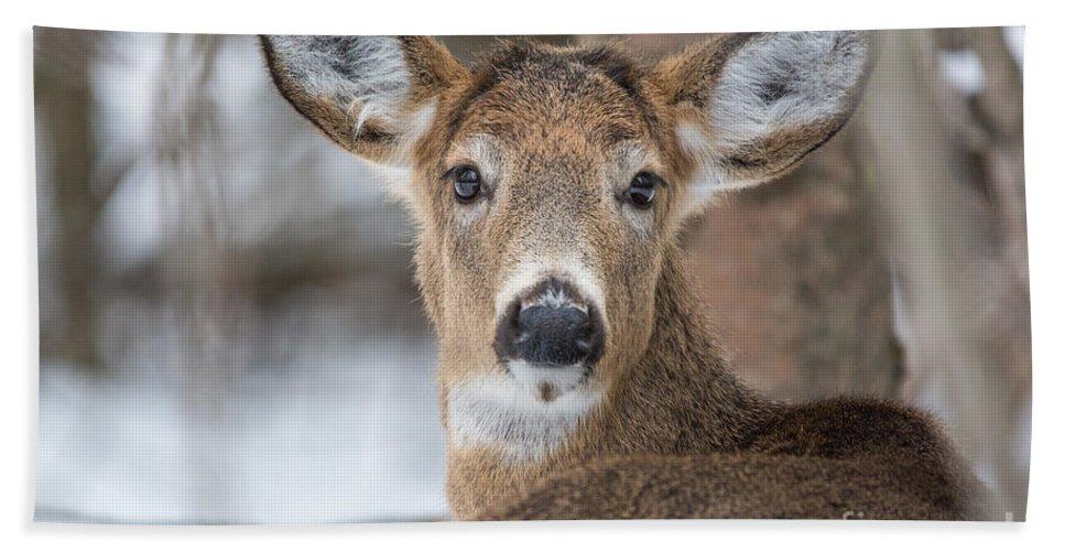 Landscape Hand Towel featuring the photograph Deer by Cheryl Baxter