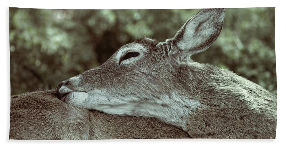 Deer Hand Towel featuring the photograph Deer Close-up by Douglas Barnard