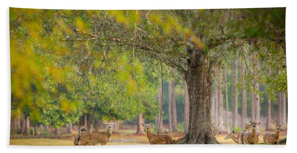 Deer Hand Towel featuring the photograph Deer Crossing by Dennis Goodman