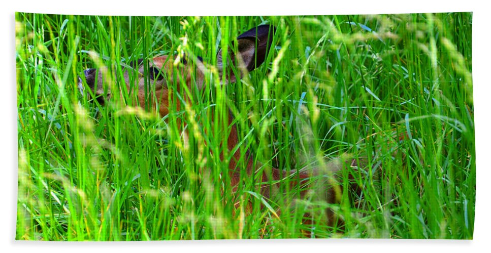 Deer Hand Towel featuring the photograph Deer In Tall Grass by David Lee Thompson