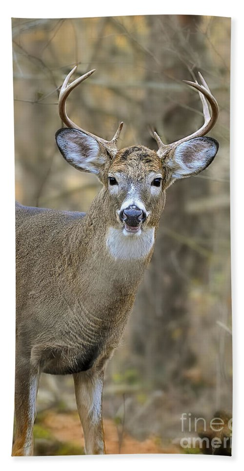 White-tailed Deer Bath Sheet featuring the photograph Deer Pictures 445 by World Wildlife Photography