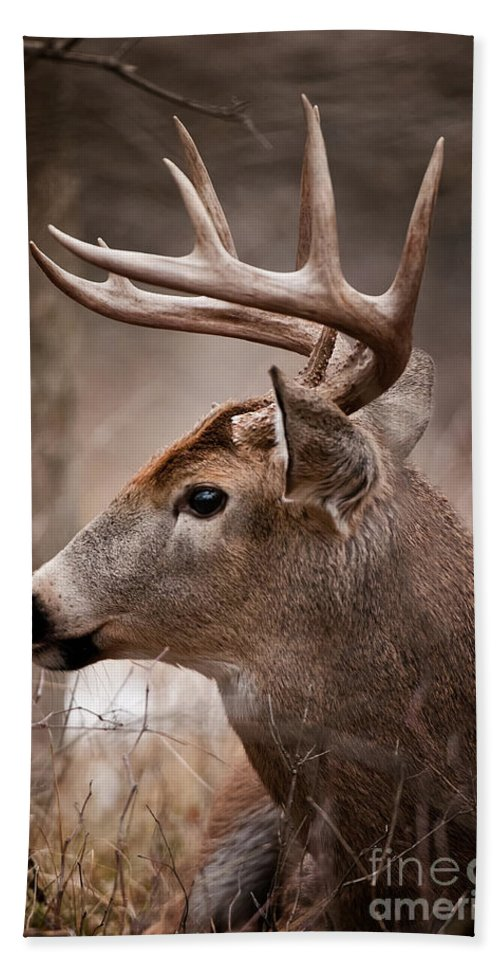 White-tailed Deer Bath Sheet featuring the photograph Deer Pictures 491 by World Wildlife Photography