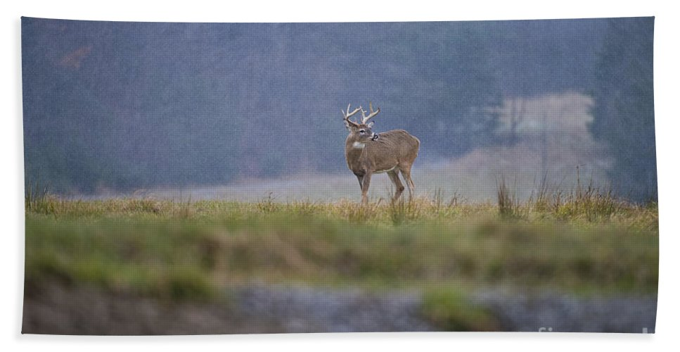 White-tailed Deer Bath Sheet featuring the photograph Deer Pictures 527 by World Wildlife Photography