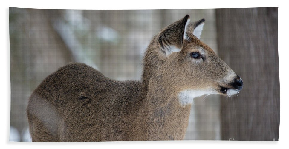 Hand Towel featuring the photograph Deer Profile by Cheryl Baxter