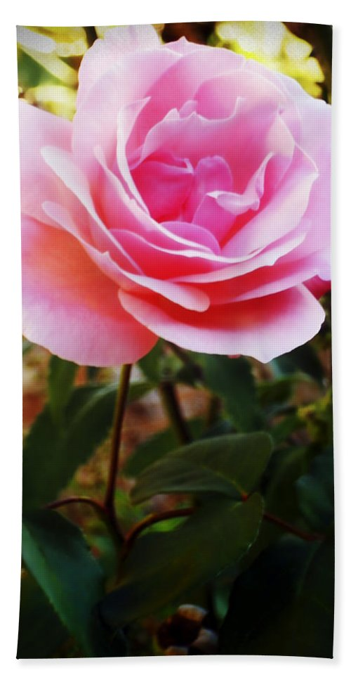 Rose Hand Towel featuring the photograph Delicacy Of Life by Lyriel Lyra