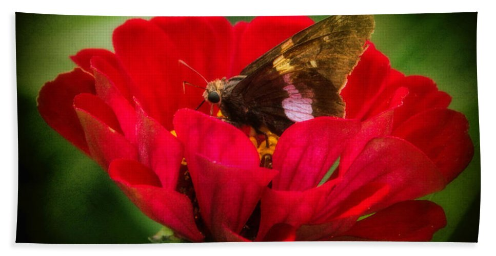 Silver Spot Skipper Butterfly Bath Sheet featuring the photograph Delicate Beauty by Elizabeth Winter