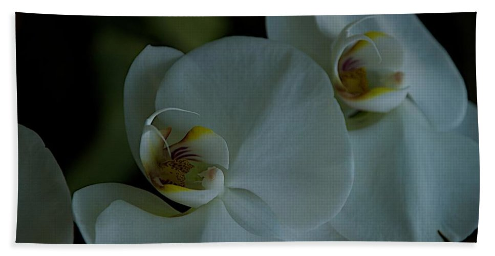 Flowers Bath Sheet featuring the photograph Delicate Bowl by Joseph Yarbrough