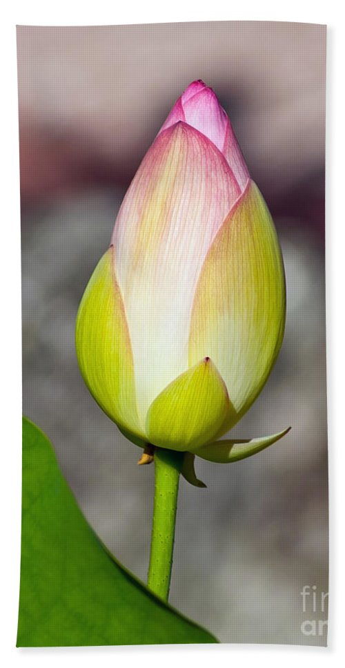 Bud Bath Sheet featuring the photograph Delicate Bud by Stephen Whalen