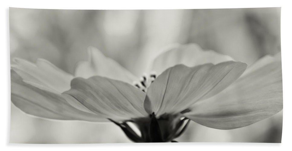 Pollen Bath Sheet featuring the photograph Delicate Cosmos by Don Schwartz