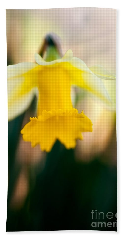 Beauty In Nature Bath Sheet featuring the photograph Delicate Daffodil by Venetta Archer