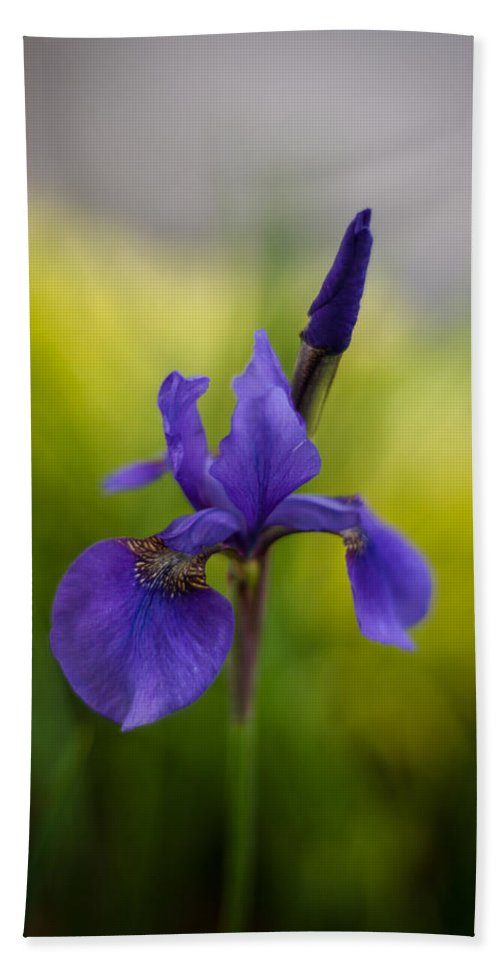 Iris Bath Sheet featuring the photograph Delicate Japanese Iris by Mike Reid
