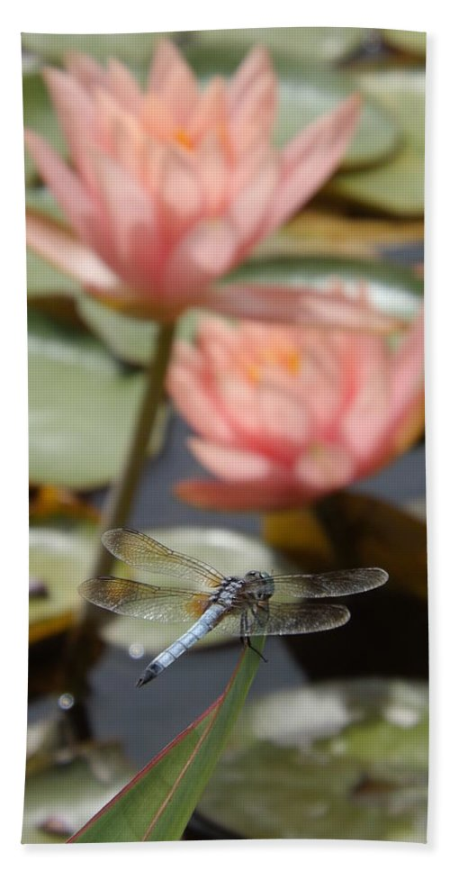 Pink Bath Sheet featuring the photograph Delicate Observer by Caryl J Bohn