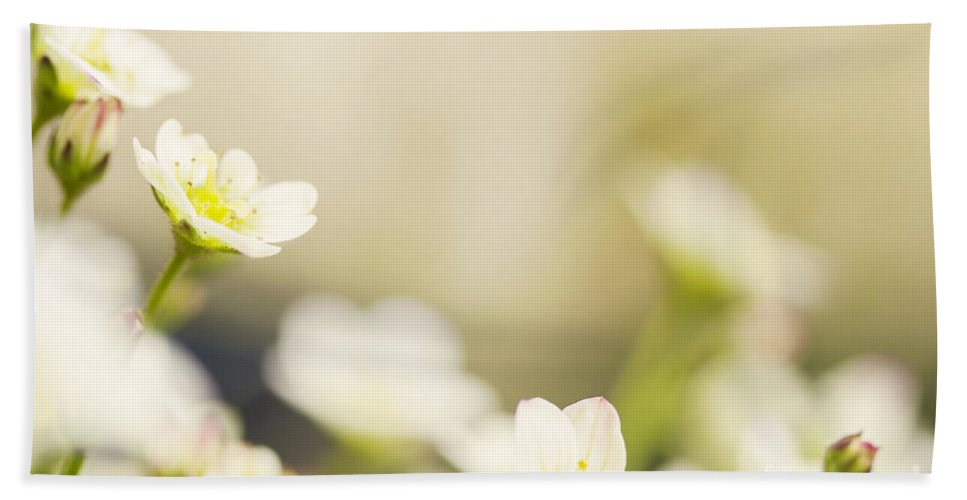 Flower Hand Towel featuring the photograph Delicate White Flowers by Sophie McAulay