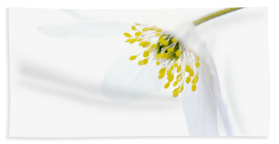 Delicate Hand Towel featuring the photograph Delicate White by HHelene