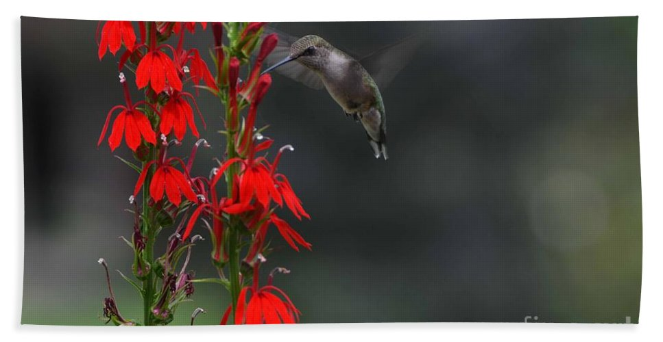 Ruby Throated Hummingbird Hand Towel featuring the photograph Delicious by Judy Wolinsky