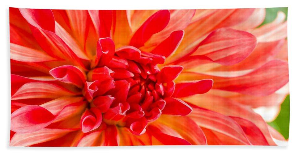 Flower Bath Sheet featuring the photograph Delightful Dahlia by Jordan Blackstone
