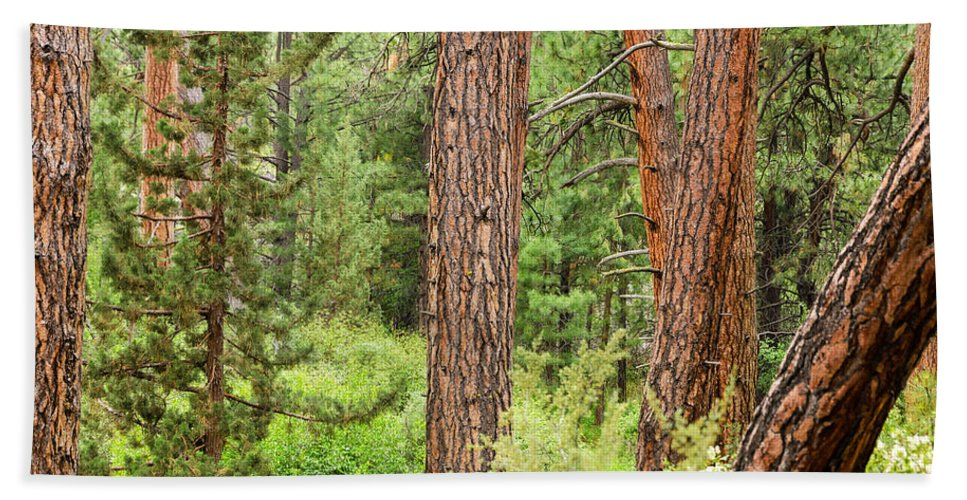 Forest Hand Towel featuring the photograph Dense Forest View by Jess Kraft