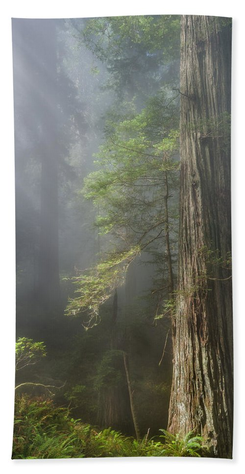 Redwoods Bath Sheet featuring the photograph Depth Of Forest by Greg Nyquist