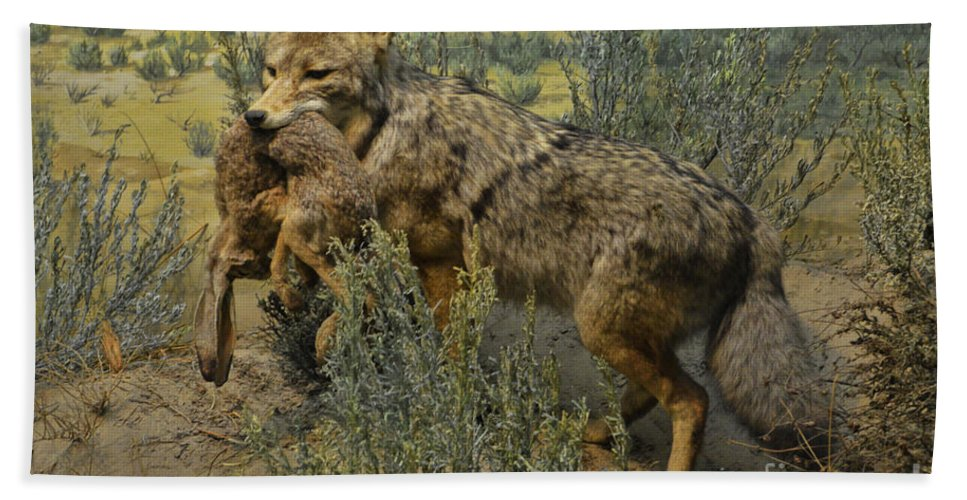 Coyote Bath Sheet featuring the photograph Desert Coyote by Tommy Anderson