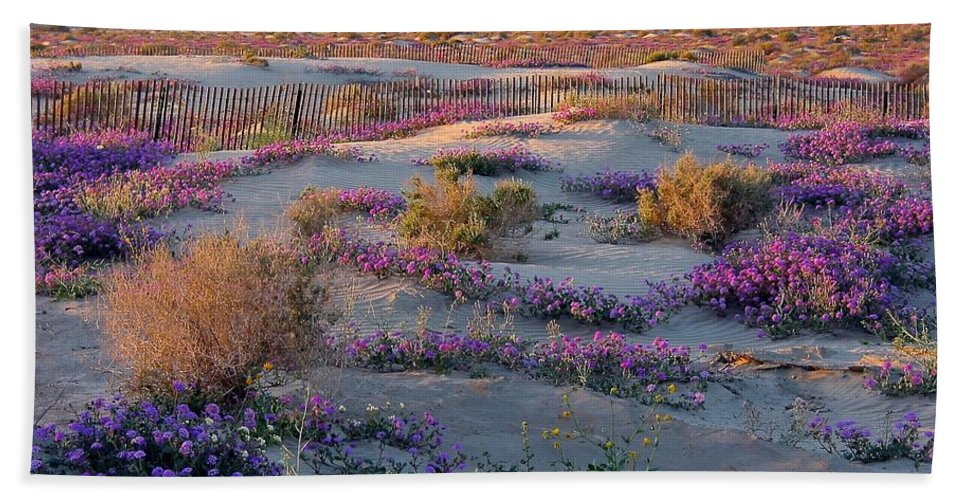 Southern California Desert Hand Towel featuring the photograph Desert In Bloom by Phyllis Kaltenbach