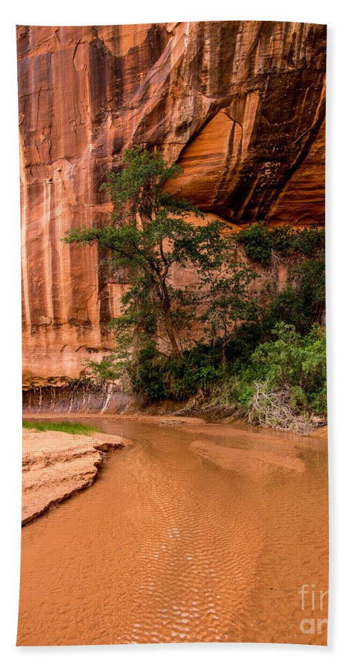 Desert Oasis Hand Towel featuring the photograph Desert Oasis - Coyote Gulch - Utah by Gary Whitton
