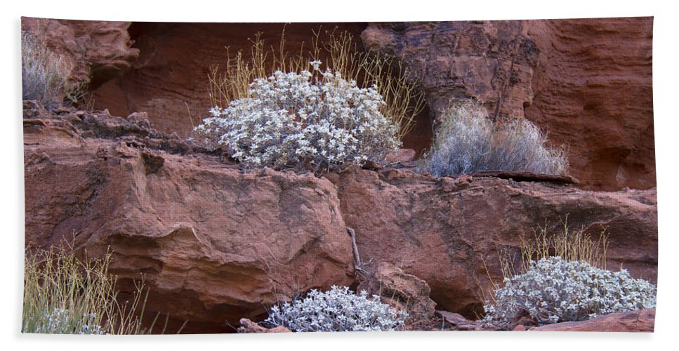Desert Plants Hand Towel featuring the photograph Desert Plant Life by Debby Richards