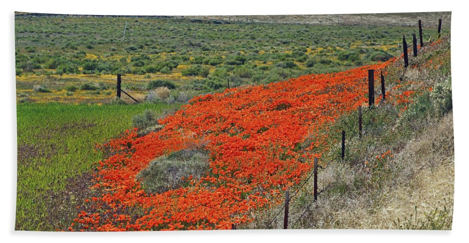 Wildflowers Hand Towel featuring the photograph Desert Wildflowers by Howard Stapleton