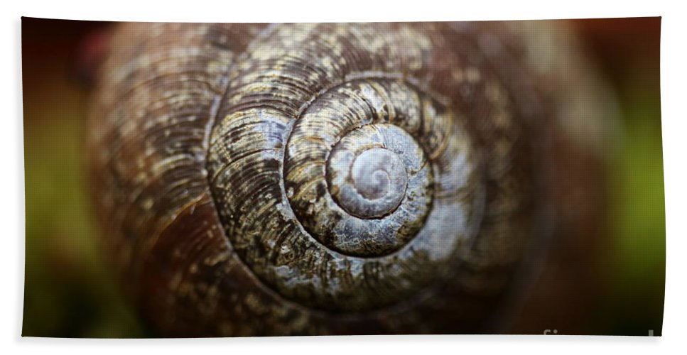 Snail Bath Sheet featuring the photograph Design In Nature by David Rucker