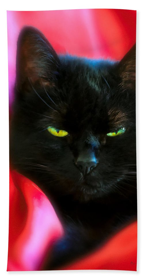 Black Cat Hand Towel featuring the photograph Devil In A Red Dress by Bob Orsillo