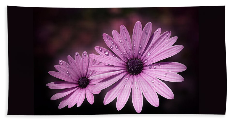 Osteospermum Hand Towel featuring the photograph Dew Drops On Daisies by Valerie Anne Kelly