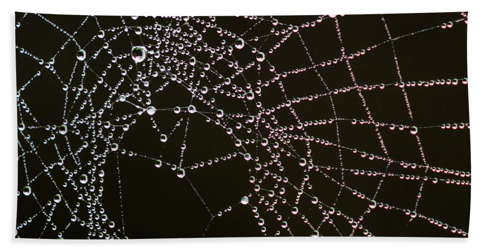 Arachnid Hand Towel featuring the photograph Dew Drops On Spider Web 4 by Tracy Knauer