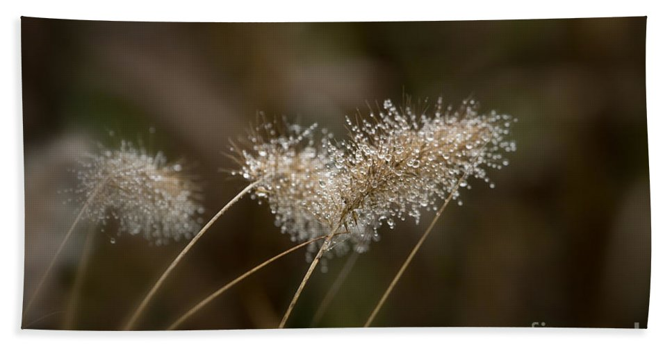 Dew Hand Towel featuring the photograph Dew On Ornamental Grass No. 2 by Belinda Greb