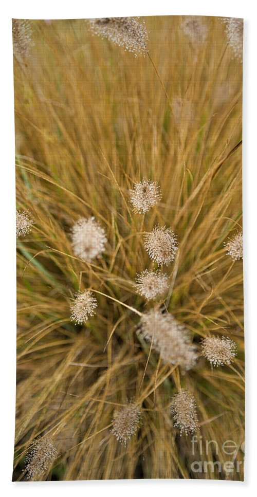 Dew Hand Towel featuring the photograph Dew On Ornamental Grass No. 3 by Belinda Greb